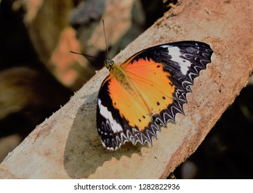 beautifull and colourfull butterfly
