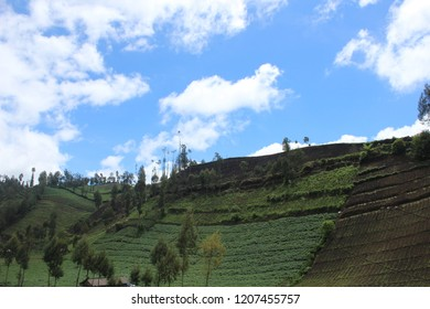 Beautifull Green Scenery