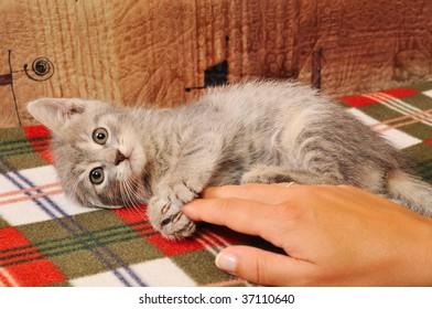 Beautifull kitten playing eith girl hand