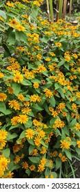 beautifull nature, beautifull flower, yellow flower in the beautifull garden