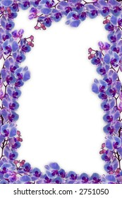 beautifull orchids frame for  love, romance or any other concept