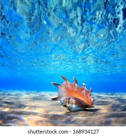 beautifull sea shell at the bottom of sand with reflections underwater