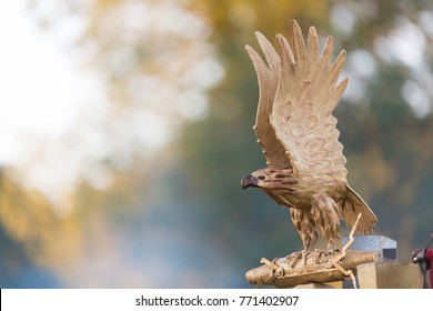 Beautifull Small statue of a golden sea bream eagle with open wings