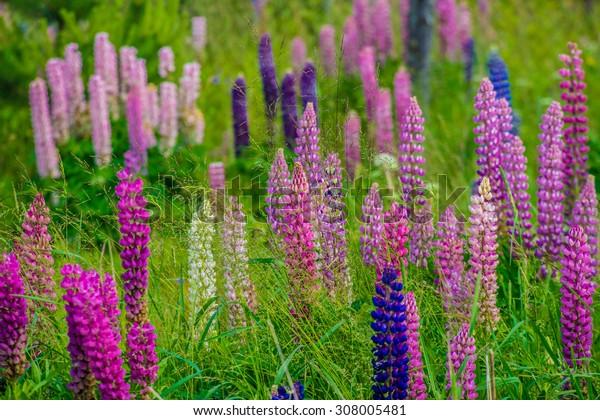 Beautifull summer flowers.Ligo time in Latvia. Blurred focus.