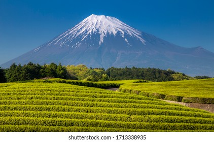beautifulll green tea field with mount fuji in the background