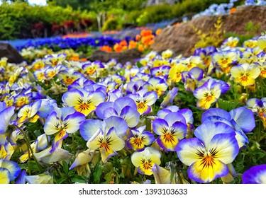 Beautifully colorful botanical gardens at the Villa Carlotta at Lago di Como