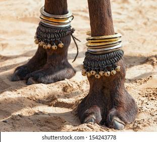 Beautifully decorated camel foot at the Pushkar Fair in India.