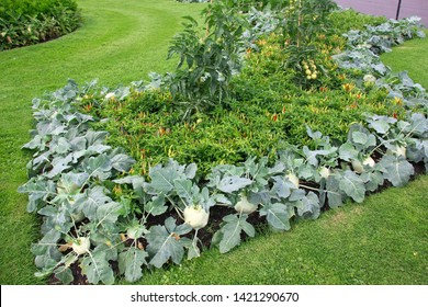 Beautifully decorated flower bed of vegetables in public park in London. Decor of hot red chili pepper, kohlrabi, tomatoes growing in vegetable garden bed in public London park.Urban greenery concept