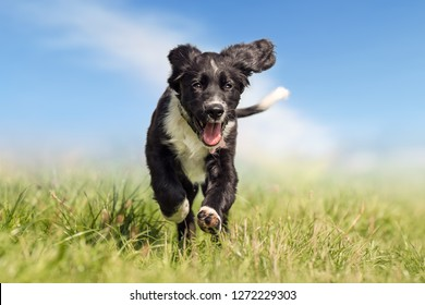 Beautifully dog running in the grass