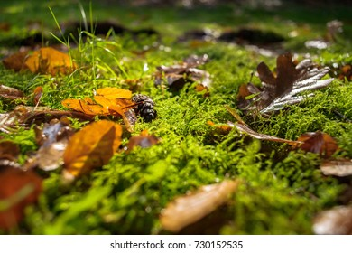Beautifully featured wet autumn leaves lie on the ground in a nature landscape with green moss and pineapple.