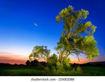 Beautifully illuminated old ash tree at nightfall with deep blue sky and moon