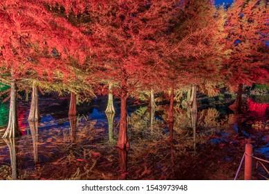 beautifully illuminated trees at the lake in autumn