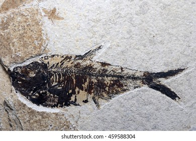 A beautifully preserved fossil fish with an insect for company, evidence of instant burial and quick fossilisation.