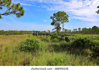 The beautifully restored Sweetbay Natural Area, , part of a Palm Beach County environmental preservation area.