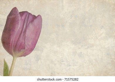 A Beautifully Textured Card with a Single Purple Tulip with Room for Text