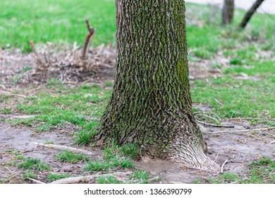 Beautifully Textured Tree Trunk in Missouri