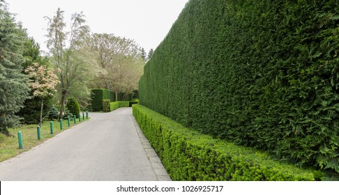 Beautifully trimmed and landscaped bushes, a green fence and front yard behind pedestrian sidewalk on an empty street. Landscape design. Trimming bush in design. Background of small plants on wall
