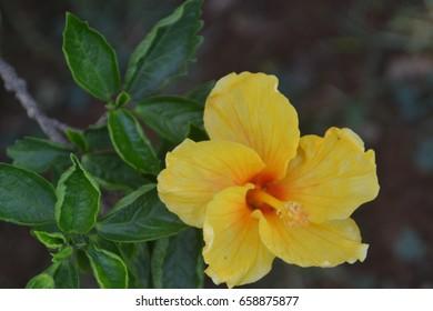 Beautifully yellow flower
