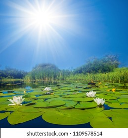 beautifulsummer lake with white lilies under a sparkle sun