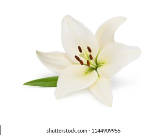 Beautifult lily flower isolated on white background. Saving clipping paths.