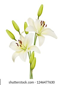 Beautifult lily flower isolated on white background.
