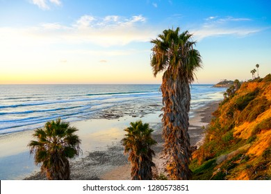 Beautiul beach next to the cliff with big palm tree, blue sky and white clouds during sunset.  San Elijo State Beach, Encinitas, San Diego, California.