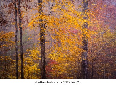 The beauty of the Appalachian mountains come alive with all the autumn colors near the Great Smoky Mountains National Park.