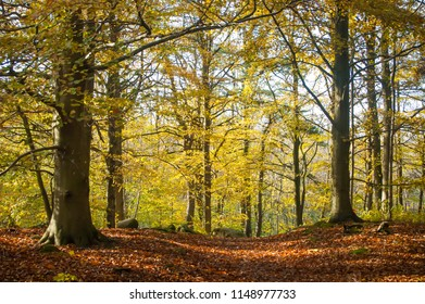 Beauty of autumn forest scenery