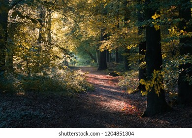 The beauty of autumn in Twente, in the east part of the Netherlands