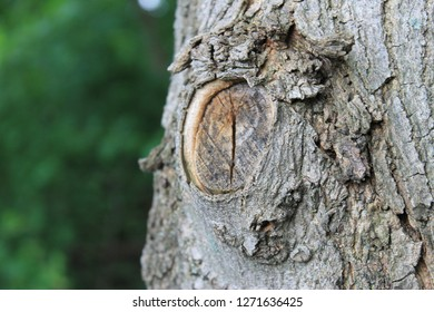Beauty in the Bark