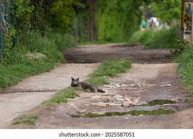 Beauty cat on a country road
