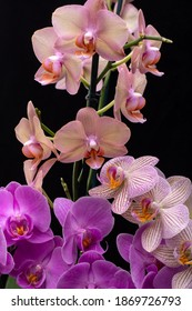 Beauty colorful orchid flowers isolated on black background