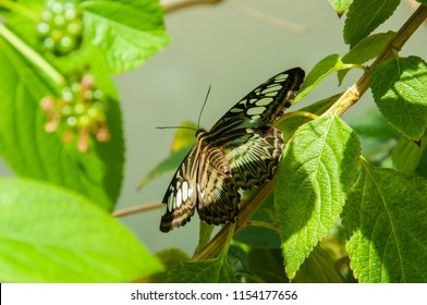 The beauty of the colors and pattern of a butterfly