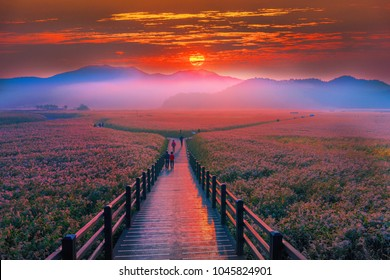 The beauty of the dawn sunrise at Suncheon bay,South Korea