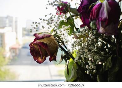 The beauty of dead flowers