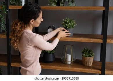 Beauty is in details. Enthusiastic young latin lady interior decorator arrange house plants on wood shelf prepare domestic design at modern flat office studio. Smiling woman owner make home feel cozy