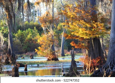 THE BEAUTY OF THE FALL SWAMP