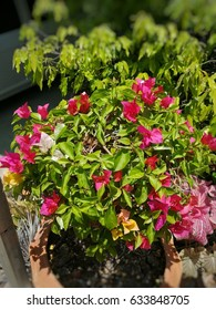 beauty flower in garden