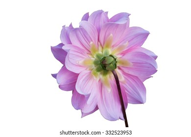 Beauty flower isolated background
