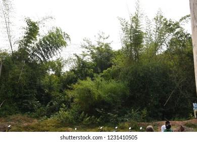 beauty full bimbo trees