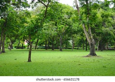 Beauty Green Tree in the Garden
