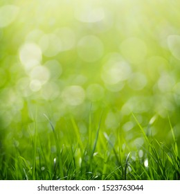 Beauty healthy backgrounds with foliage, green grass and bokeh