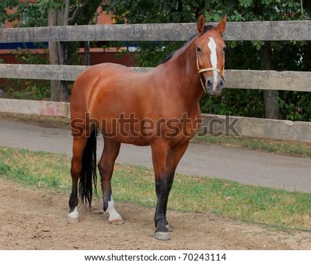 Beauty Horse Stock Photo (Edit Now) 70243114 - Shutterstock
