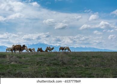 Beauty of Kazakhstan