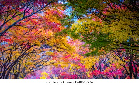 beauty of leaves in autumn