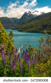 The beauty of Los Alerces National Park, Argentina