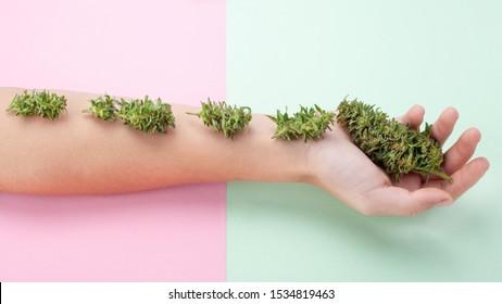 beauty marijuana concept,beautiful female hand with fresh green cannabis buds,organic cosmetics from cannabis inflorescences.