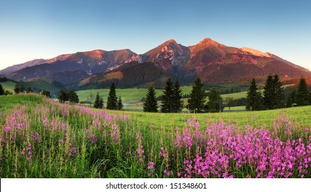 Beauty mountain panorama with flowers - Belianske Tatry