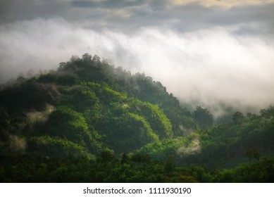 beauty in Nature cloud-sky environment fogforest Greencolor Growth