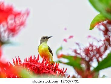 the beauty of nature, Honey bird